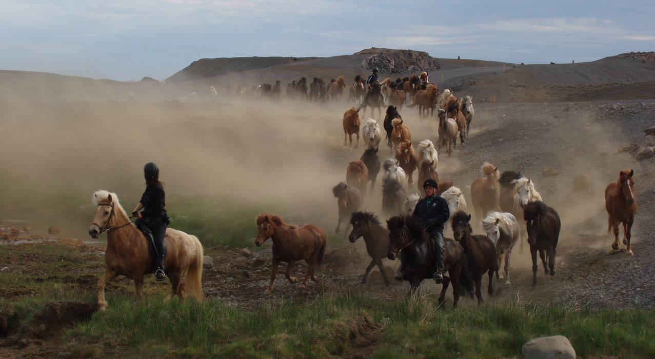 Pferde auf einer Reittour in unbewohnten Gebieten Islands